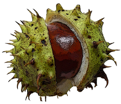 Conkers 1