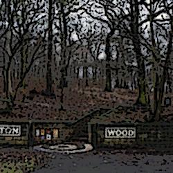 Gipton Wood 2