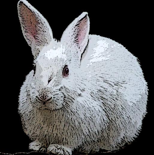 rabbit-white